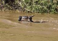 near a Crocodile