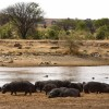 Hippos, slow wake up