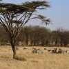 Serengeti North landscape