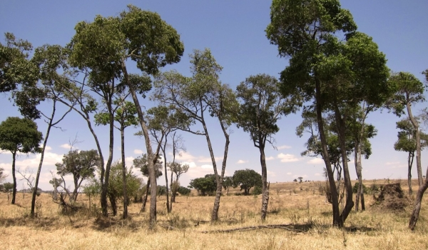Small «herd» of lost trees