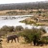 Life near the Mara river