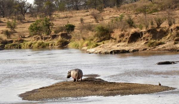 «Robinson Crusoe» Hippo