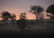 Under the African sunset…