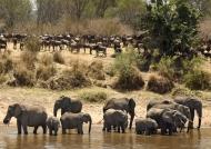 2 clans: Elephants & Gnus