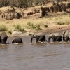 Then crossing the Mara river