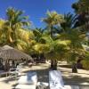 Palm trees around the beach
