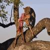 Leopards & Hyenas 2nd trip