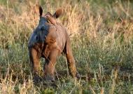 Alright baby Rhino?