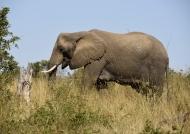 Elephant profile on the sky