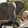 Elephants – 2nd trip