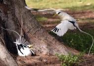 nesting at the base…..