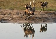 Amazing reflection!