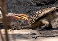 Beak to beak…