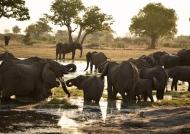 invites Elephants to gather…