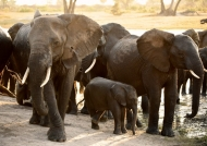 Baby Elephant well protected