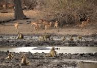 Gathering near Kanga Pan