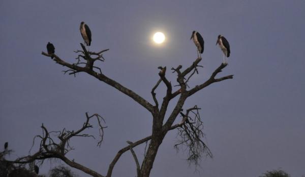 Early morning moon…