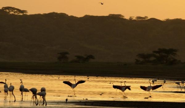 Flamingoes greeting the sun