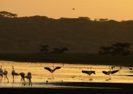 Flamingoes greeting the sun