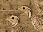 Birds (May-48 species)