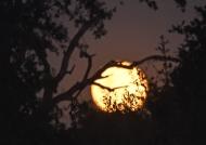 On a full moon night…