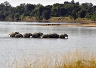 & crossing the Luangwa river