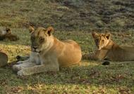 Mum with cub