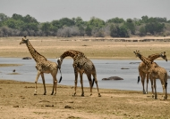 near the Mara River and…
