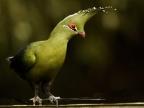Birds (Oct.-14 species)