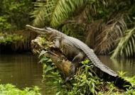 in Gabon which has…