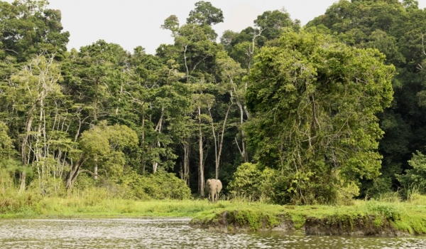 Forest Elephant welcoming us