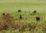 Special Termite mounds