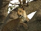 Uganda – Mammals