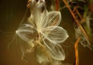 Costa Rica Seeds of liana