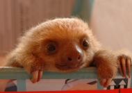 Costa Rica – Sloth nursery