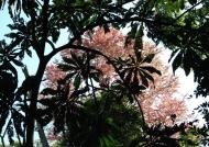 Panama  Nature Art