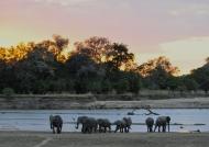 Zambia – Elephant sunset aperitif