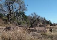 Zambia – Kafue NP