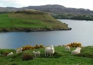 Skye – Loch Harport