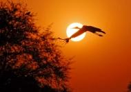 Sunset nature show