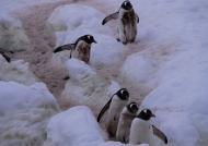 Penguins road