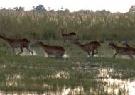 Painting of Botswana