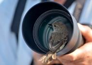 Green warbler-Finch