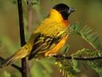Uganda – Birds