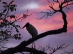 Pantanal – Landscape