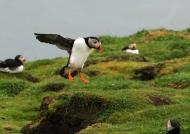Landing on Lunga Island