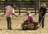 Cowboys preparing the horse