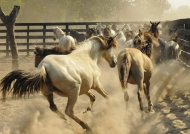 Running in the corral