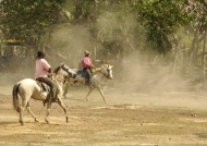 Cowboys gathering horses