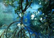 Aquarium Marine Life